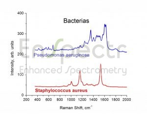 SERS-spectrums-of-bacteria-1024x791